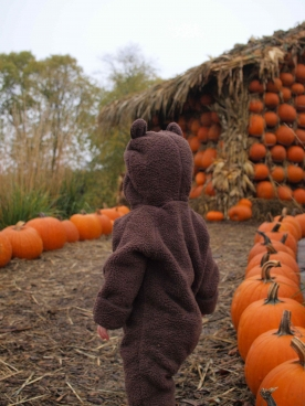 Little bear at the pumpkin house.