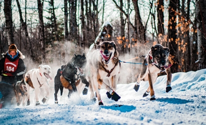 Sled dogs run at the 2019 John Beargrease Sled Dog Marathon
