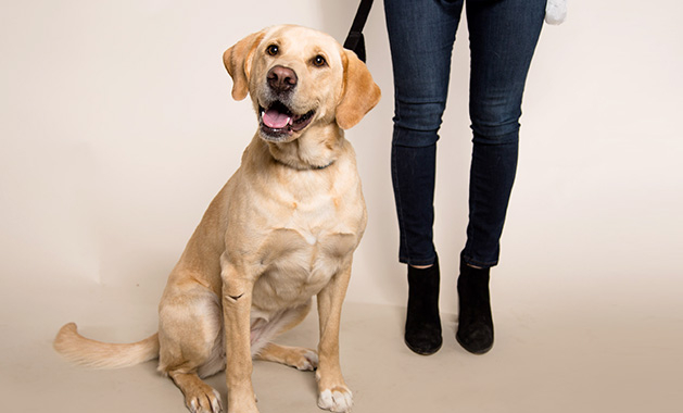 Nala, a dog adopted from Secondhand Hounds, stands near her owner.