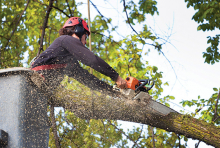 A man in a cherry picker uses a chainsaw to cut a tree branch.