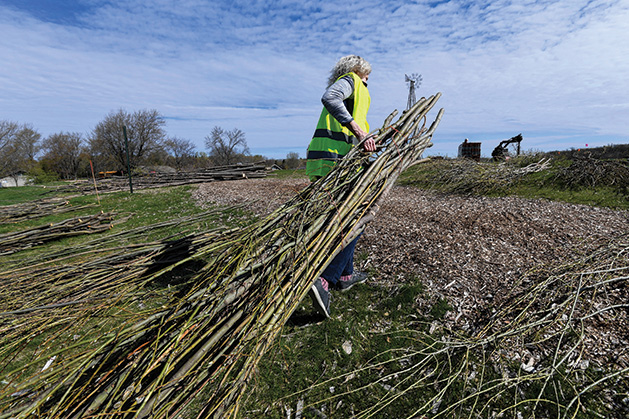 A Minnesota Landscape Arboretum volunteer drags a bundle of branches to the installation site for YouBetcha